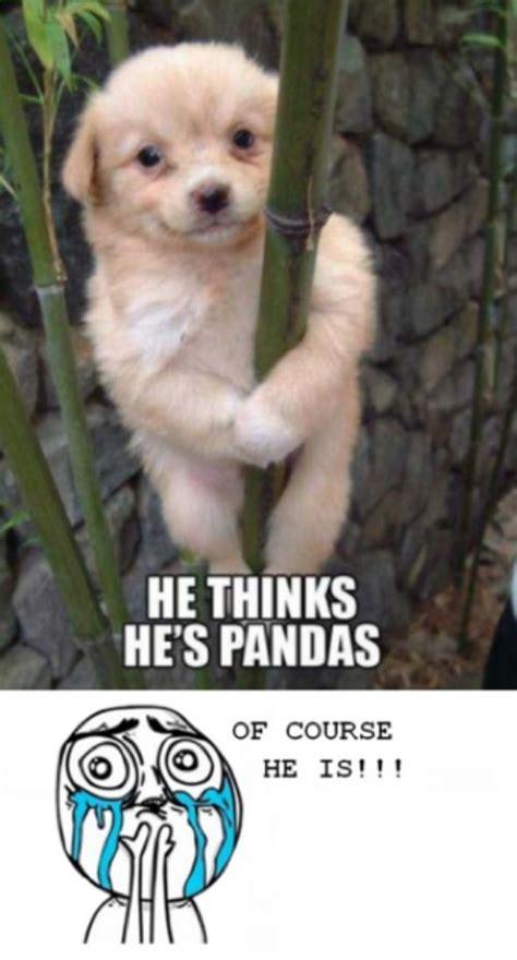 Cute Meme - cute panda meme