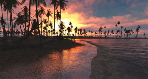 palm tree sunset wallpaper landscape nature  wallpapers