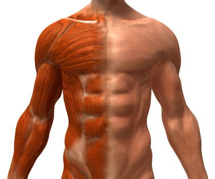 unit 2 muscular system and joints mrs cbell