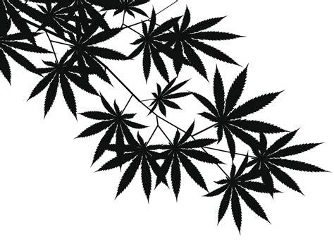 black and white weed wallpaper grateful dead s bob weir says marijuana s addictive