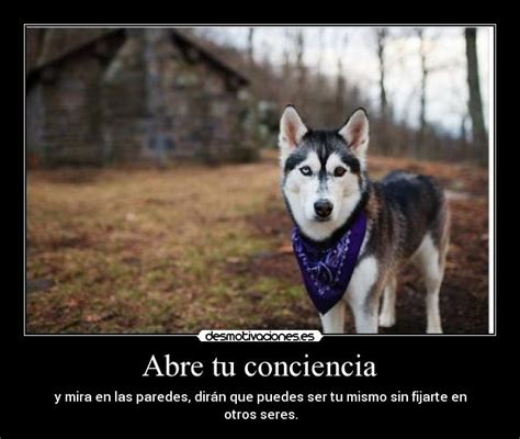 imagenes de lobos tristes abre tu conciencia desmotivaciones