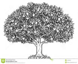 How To Draw A Tree Psikotes Apple Tree Stock Illustration Image 41902954
