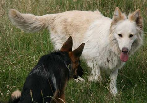 how in between puppies communication between dogs and puppies doglistener
