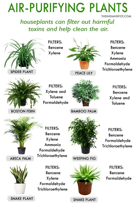 best home plants best house plants for clean air and better health