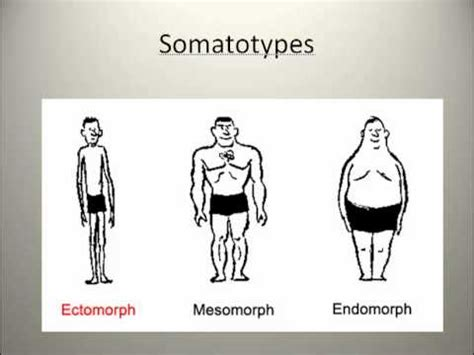 the myth of the mesomorph ectomorph amp endomorph i body