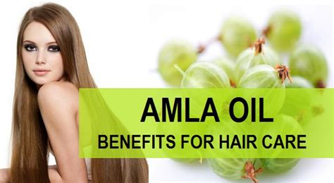 Amla Gooseberry For Hair by Benefits Of Amla Indian Gooseberry For Hair
