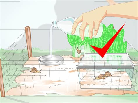 how to find a snail in your backyard 100 where can you find snails in your backyard 6 tips for feeding wild turkeys