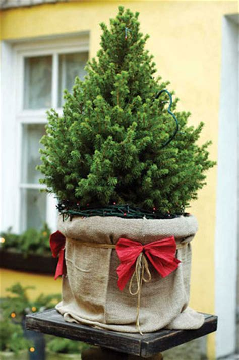 caring    christmas tree nature  environment