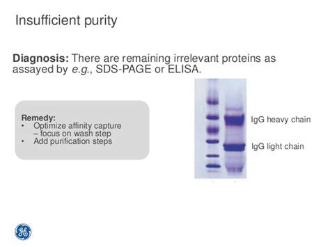 protein l column antibody purification tips and tricks
