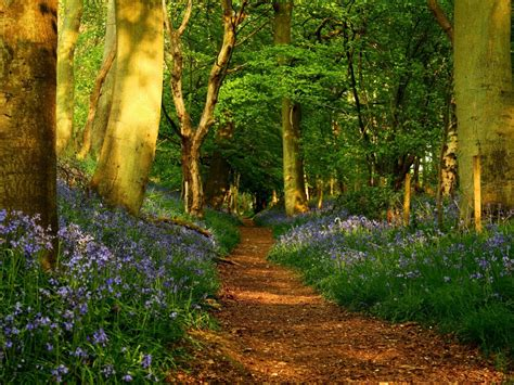 imagenes de bosques otoñales bosque frondoso hd fondoswiki com