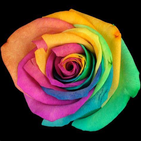 Box A Single Rainbow Multicolor Happy Preserved Flower send a single happy rainbow buy a single happy rainbow post a single happy rainbow