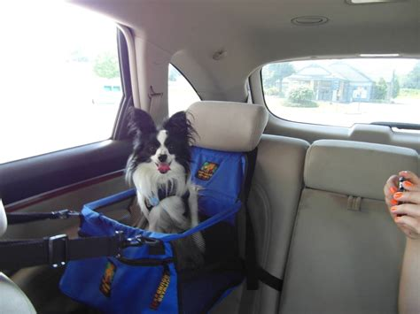 is it illegal to bury your dog in your backyard dog booster seat ireland 100 top 15 best car seats for