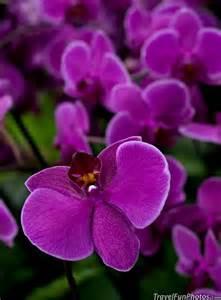 Garden Flowers Purple Orchids