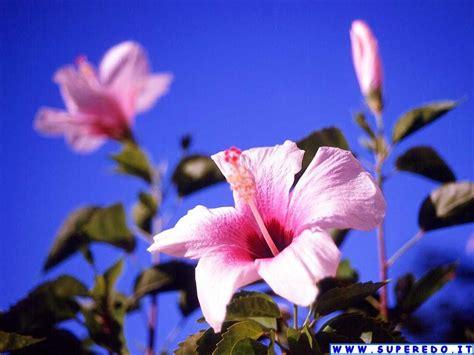 foto fiori immagini fiori 58 immagini in alta definizione hd