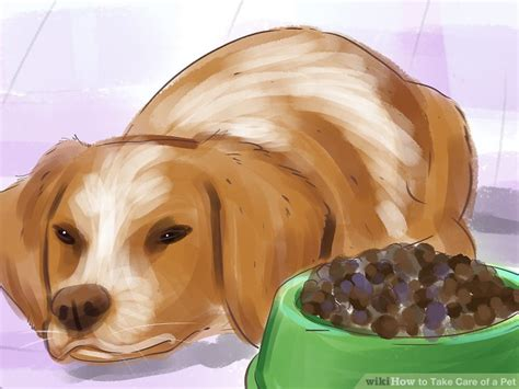 care   pet  steps  pictures wikihow
