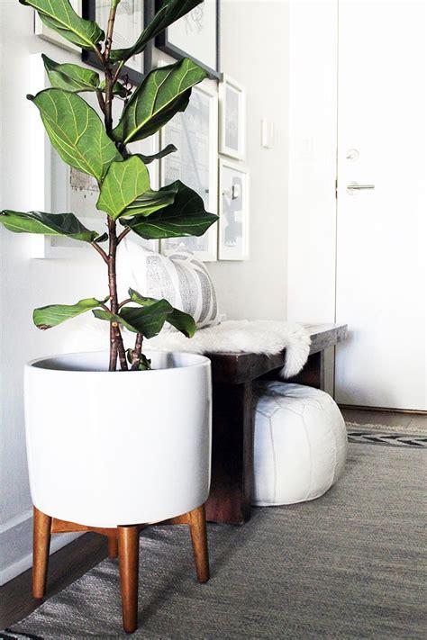 beautiful decorating plants indoors ideas amazing home