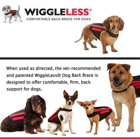 hip problems in dogs back brace from wiggleless usa zoomadog for canine hip