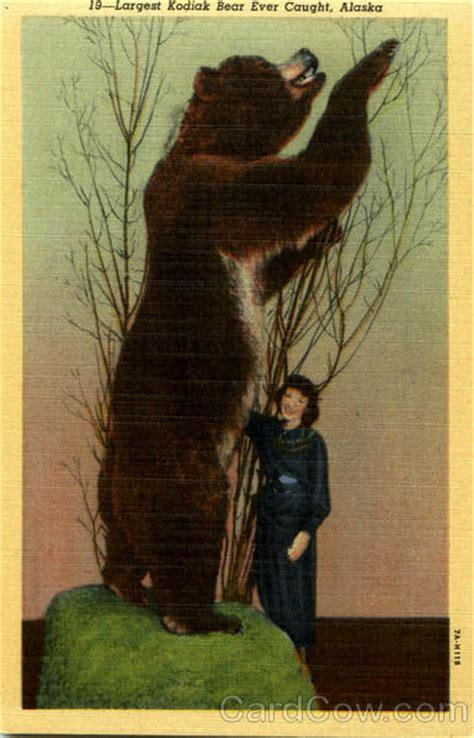 largest kodiak bear  caught  alaska bears
