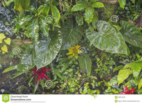 tropical plant species tropical plants background stock photo image 39273278