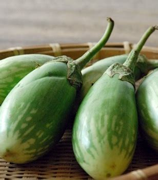 Agatha F1 Benih Tomat Isi 5 Gram Atau 1750 Biji benih terong hijau gemuk