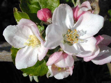 imagenes de rosas verdes con frases imagenes de flores arte taringa