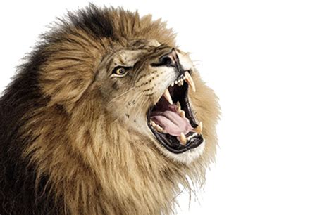 lions roar top tips for creating gmail newsletters flashissue blog