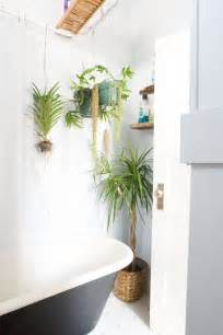 hanging pictures best plants that suit your bathroom fresh decor ideas