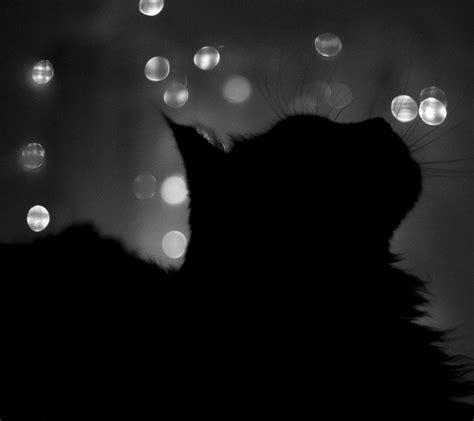whatsapp wallpaper black and white cute black cats kittens images wallpapers images whatsapp dp