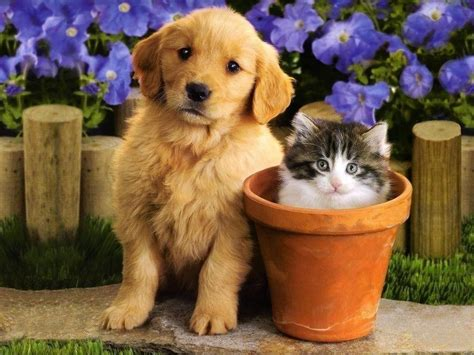 puppies and kitties puppies and kittens wallpapers wallpaper cave
