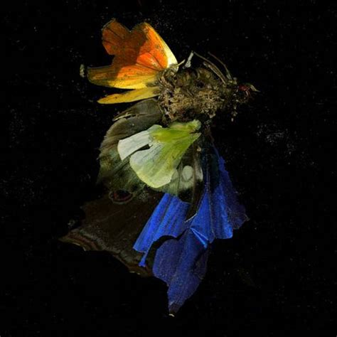 Mat Collishaw by Insecticide By Matt Collishaw Photography