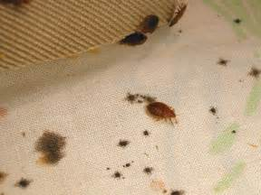 how to tell if you have bed bugs page 6 of 8