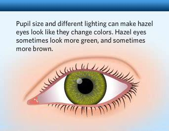 facts about eye color human eye color chart with facts