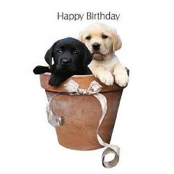 black and yellow labrador puppy dogs birthday card potted pups free uk post ebay