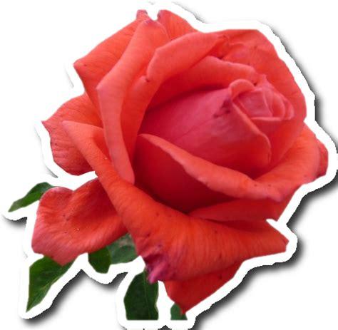 como hacer imagenes png en photoscape stickers flowers flores png scrap
