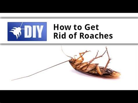 how to get rid of cockroaches in bathroom 7 best fleas images on pinterest