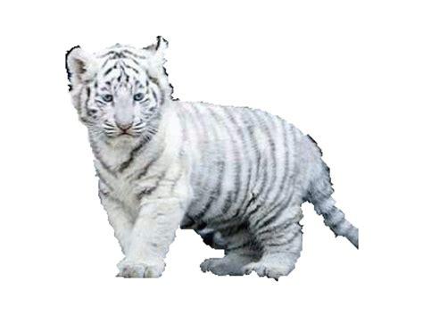 imagenes animales sin fondo yaiza imagenes sin fondo