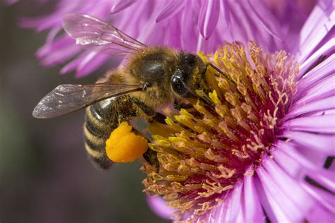 abeille assurances si鑒e social 201 ducation 224 la nature l abeille ekolien curieux par nature
