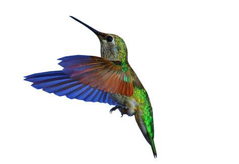 hummingbirds images hummingbirds hd wallpaper and