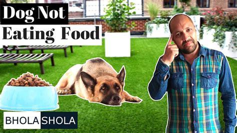 dog not eating health problem my dog is not eating food bhola shola