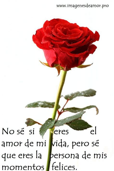 imagenes rosas con poemas 620 best ideas about amor por jose luis on pinterest