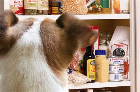 Food Pantry For Dogs by 7 Reasons Why A Should Be President The For