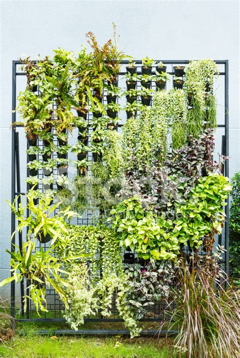 vertical garden stock photos freeimages