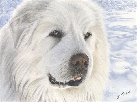 great pyrenees colors tribute to pyreless the great pyrenees mountain