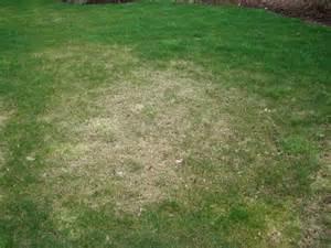 Methods Of Plant Disease Management - lawn pests wolbert s plant essentials
