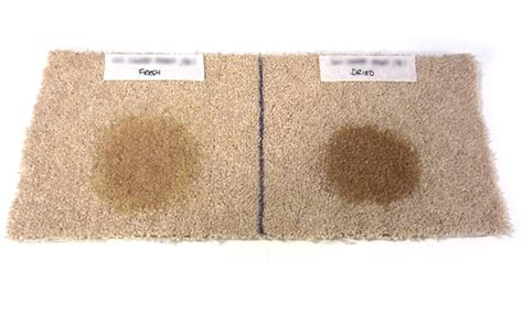 Which Best Buy Carpet Cleaner 2014 - which reveals carpet stain removers that work april