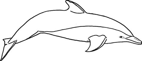 coloring page of bottlenose dolphin bottlenose dolphin drawing clipart panda free clipart