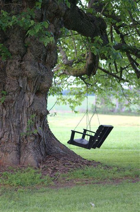 old tree swing old swing swing pinterest