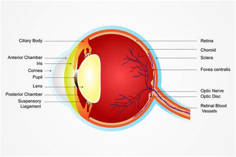 causes of lights in peripheral vision flash of light in corner of eye tips and tricks from doctors