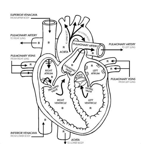 heart diagram 15 free printable word excel eps psd