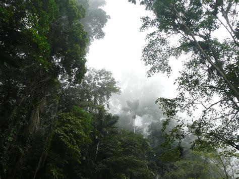 la selva tropical clima tropical wikiwand